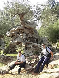 Walking through olive trees